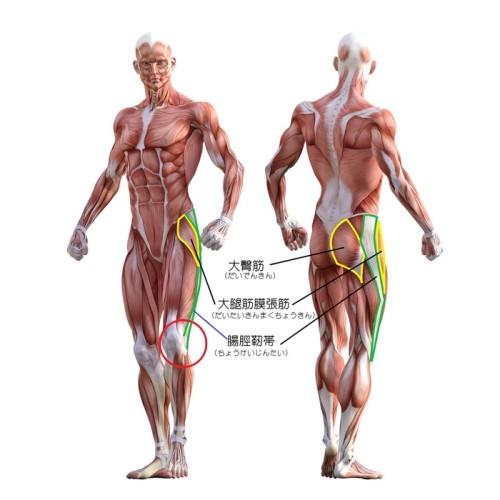 腸脛靭帯-thumb-700xauto-249